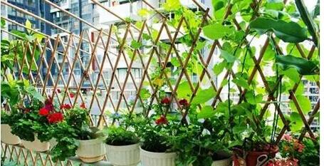 南北方阳台蔬菜种植收获时间表.jpg