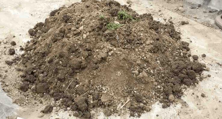 阳台种菜用什么土比较好?一般到哪里弄种菜土?.png