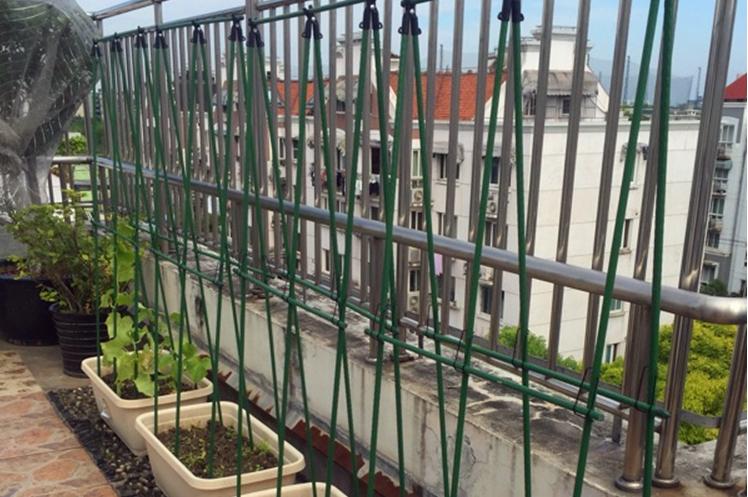 黄瓜架怎么搭,黄瓜阳台盆栽常用搭架方法图解1.png