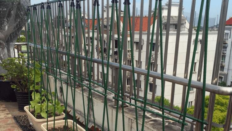 黄瓜架怎么搭,黄瓜阳台盆栽常用搭架方法图解20(1).png