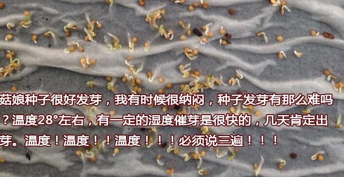 姑娘果(菇娘果)阳台盆栽种植方法1发芽.jpg