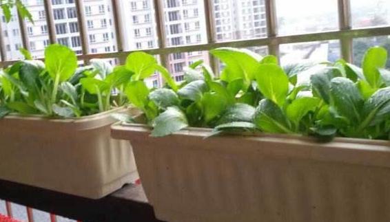 上海8月份适合种什么菜?上海八月份可以开始播种那些蔬菜.jpg