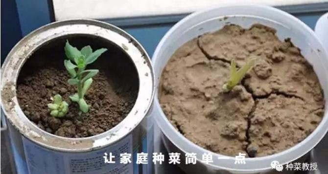 阳台种菜土壤板结怎么办?.png