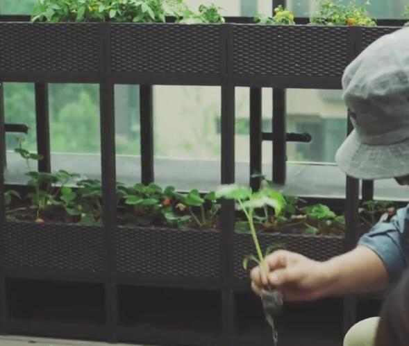 西红柿苗种植箱4.jpg