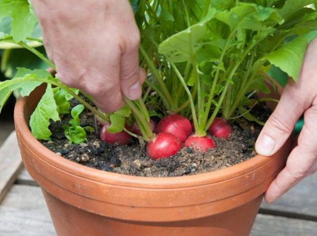 种菜盆用什么材质安全?阳台种菜盆用什么材质的比较好?2.png